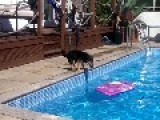 Surfer Dog Perfects The Way To Cross A Pool