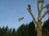 SOUTHAMPTON TREE SURGEONS GET 500 CALLS IN ONE HOUR