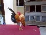 Super Cock