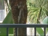 Squirrels - Fast Little F&#kers