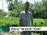 Spanish Farmers Look For Sweet Success From Stevia Plant
