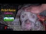 Saving Cadence - An Abused Pit Bull Shows Us The Power Of Second Chances. Please Share