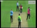 Seagull Smashed By Cricket Ball