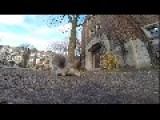 Squirrel Doing His Thing With Gopro
