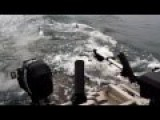 Sea Lions Try And Use A Whale Watching Boat As Cover From Orcas