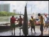 Sharks Recife-PE-BRAZIL