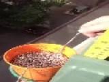 Self Siphoning Bead Ball-chain