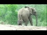 Safari Tourists Are Caught In An Elephant Trap