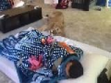 Saudi Man AndLion Share Bedroom