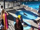 Sea Lion Goes For A Swim In Public Pool