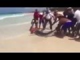 Shark Killed When Tourists Drag It Out Of The Water For A Photo