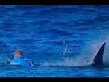 Surfer Attacked By Huge Great White Shark