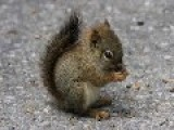 Squirrel Has Some Nuts, Then Bust A Nut