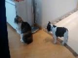 Sage Cat Ignores Excited Puppy