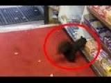 Squirrels Snatch Chocolate Bar Off Store Shelves