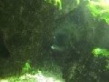 Swimming Through A Natural Underwater Tunnel