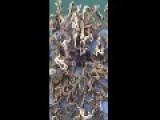 Singapore Fisherman Catches Alien Creature