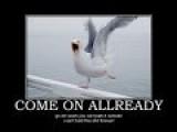 Surf & Birds