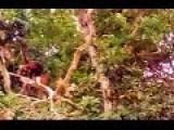 Spider Monkey Family Calakmul México