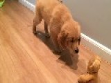 Sneaky Pup Tiptoes And Snatches Cuddly Toy