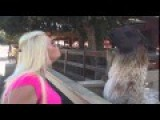 Try Not To Laugh Blonde And Lama Funny Moments Videos
