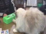 This Cat Goes Rocky Balboa On Box Of Tissues