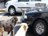 The Attack Of The Wheel-eater Dog Gang