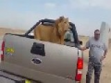 The Iraqi Army Has Captured A Lion In Samarra!
