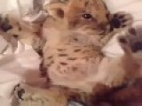 This Cat Is Cute