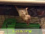 Top Of Cage Hamster Fall