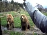 The Friendly, Waving Bears Of Olympic Game Farm