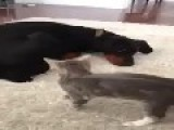 The World's Most Patient Dog