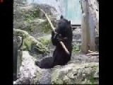 The Real Kung Fu Panda You Have To See It To Believe It . Unbelievable