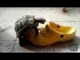 Turtle Vs Shoe