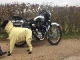 This Kevlar Wearing Dog Loves To Ride In Sidecar