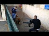 Training Dog Gone Wrong And Funny