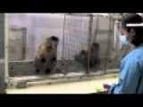 Two Monkeys - Paid Unequally