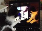 This Kitten Is Completely Mindblown By 'Catception' Experiment