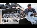 The Worst Fish In America: Asian Carpocalypse