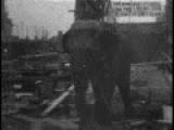 Thomas Edison Electrocutes Elephant To Death