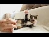 Tickling A Feisty Cat