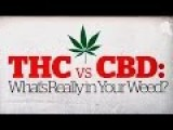 THC Vs CBD: What's Really In Your Weed? CBC Marketplace