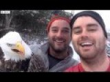 Two Canadians Saved Eagle Caught In Trap