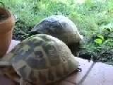 Turtle Boy Enjoying Some Sex