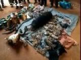 Thailand Raids Tiger Temple Removing Big Cats