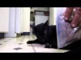Talking Kitty Cat Cake And Catnip