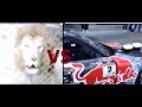 The Similarity Between The Roar Of A Lion And The Supercharger Car