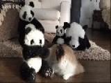 Timo's Panda Bear Camouflage