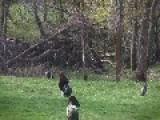 Turkey Hunting With A Twist