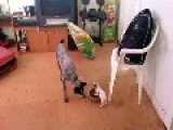 Totally Fearless Puppy Defends Food Bowl